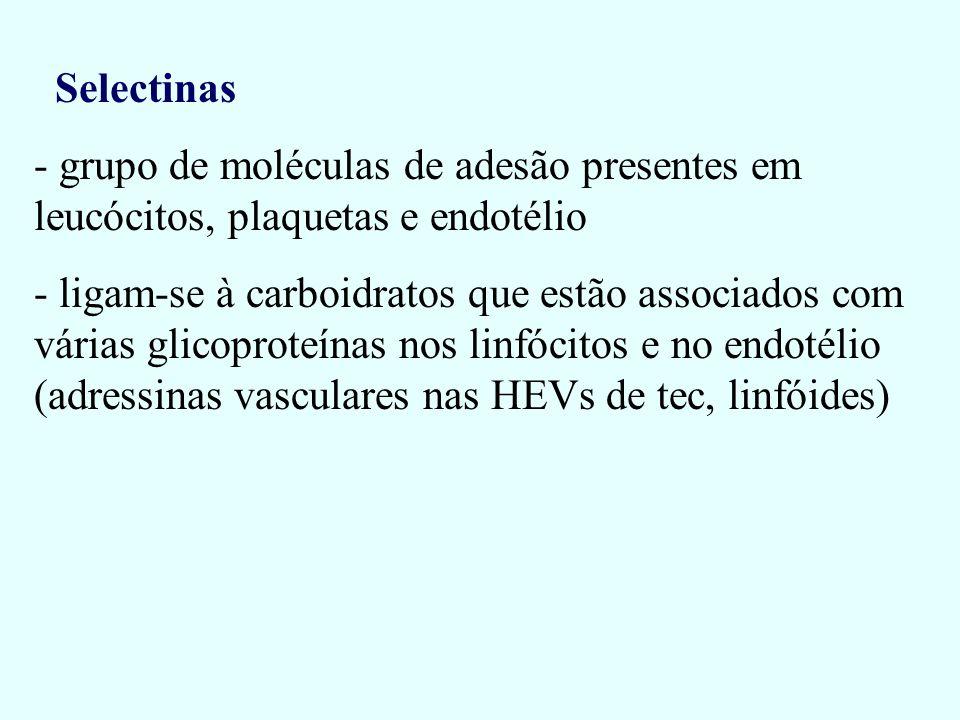 Selectinas - grupo de moléculas de adesão presentes em leucócitos, plaquetas e endotélio - ligam-se à carboidratos que estão associados com várias gli