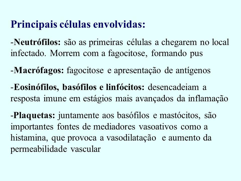 Principais células envolvidas: -Neutrófilos: são as primeiras células a chegarem no local infectado. Morrem com a fagocitose, formando pus -Macrófagos