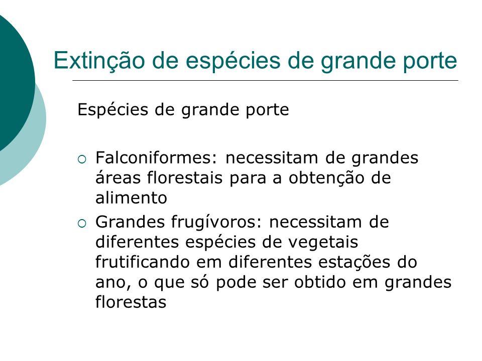 Extinção de espécies de grande porte Espécies de grande porte Falconiformes: necessitam de grandes áreas florestais para a obtenção de alimento Grande