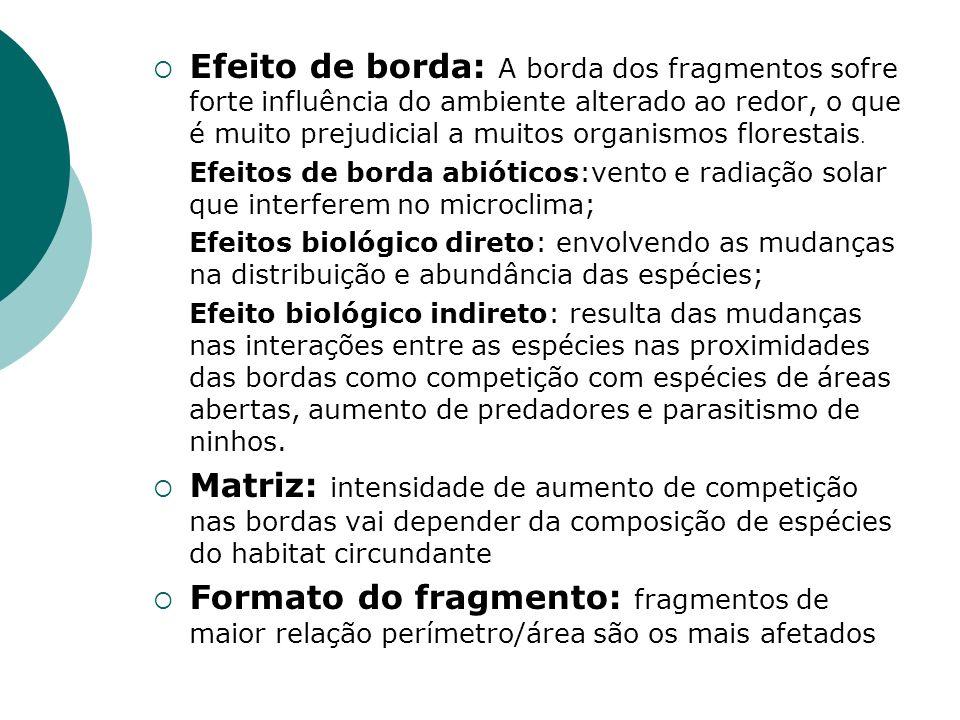 Efeito de borda: A borda dos fragmentos sofre forte influência do ambiente alterado ao redor, o que é muito prejudicial a muitos organismos florestais
