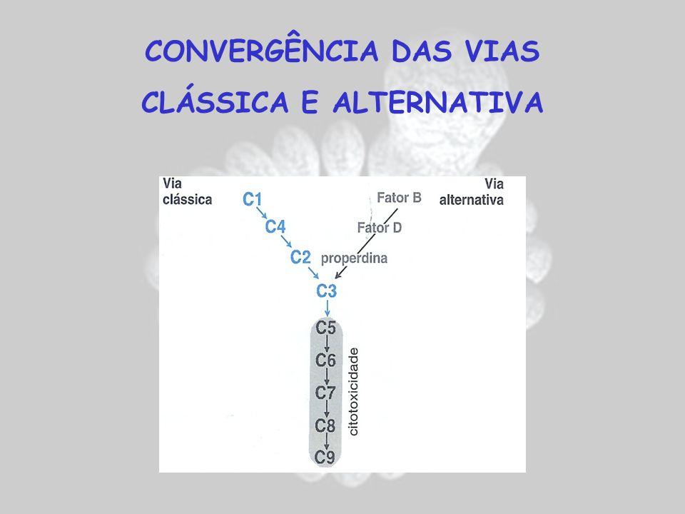 CONVERGÊNCIA DAS VIAS CLÁSSICA E ALTERNATIVA