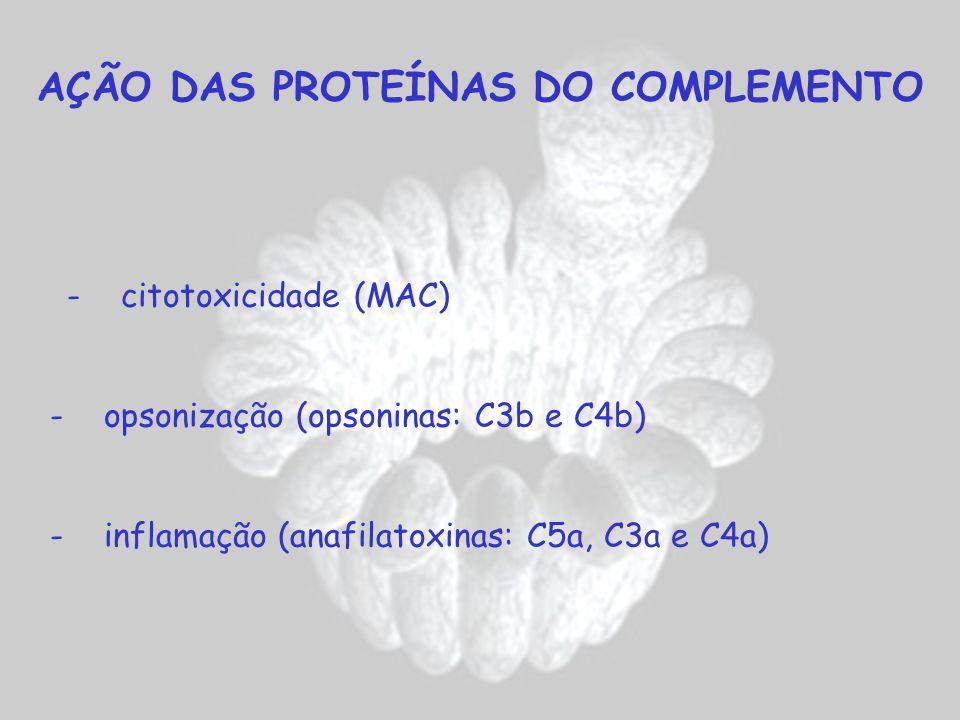 AÇÃO DAS PROTEÍNAS DO COMPLEMENTO - citotoxicidade (MAC) - opsonização (opsoninas: C3b e C4b) - inflamação (anafilatoxinas: C5a, C3a e C4a)