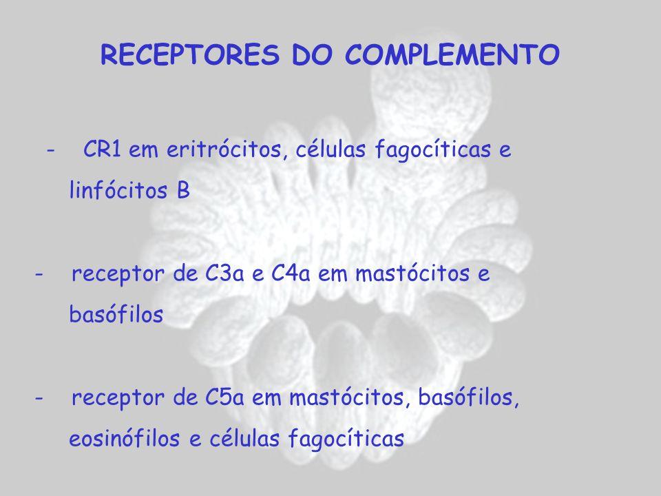 RECEPTORES DO COMPLEMENTO - CR1 em eritrócitos, células fagocíticas e linfócitos B - receptor de C3a e C4a em mastócitos e basófilos - receptor de C5a