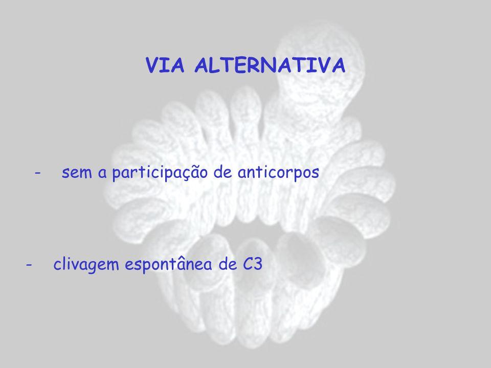 VIA ALTERNATIVA - sem a participação de anticorpos - clivagem espontânea de C3