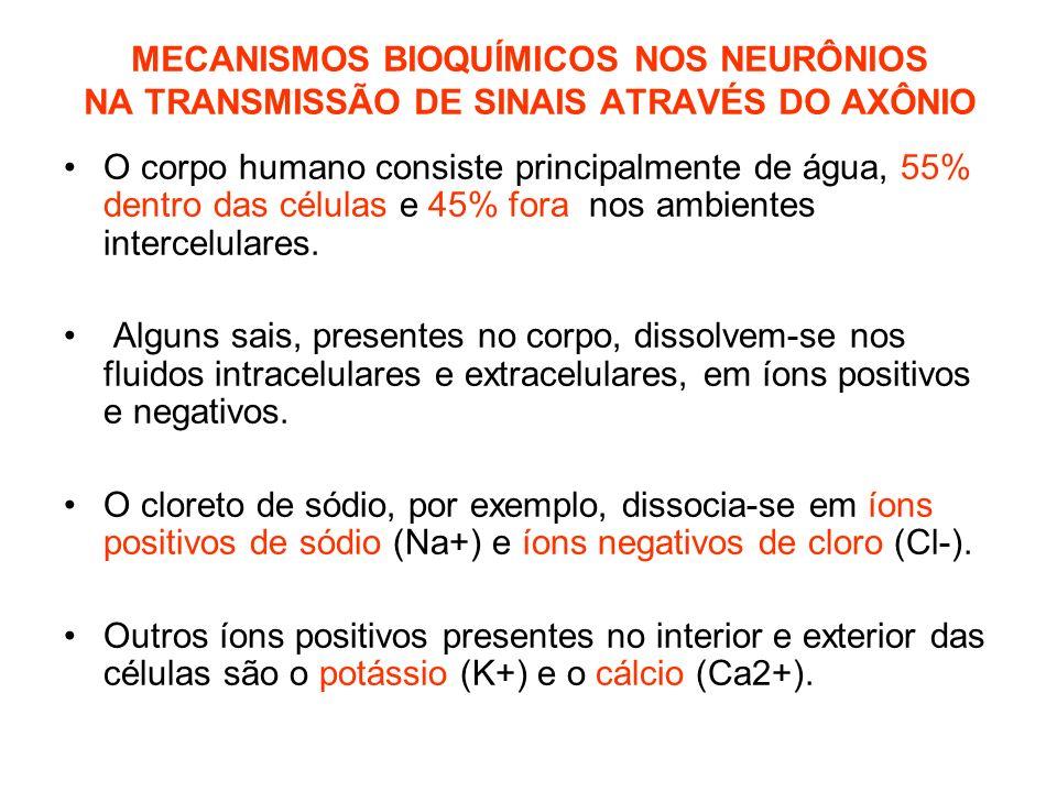 MECANISMOS BIOQUÍMICOS NOS NEURÔNIOS NA TRANSMISSÃO DE SINAIS ATRAVÉS DO AXÔNIO O corpo humano consiste principalmente de água, 55% dentro das células