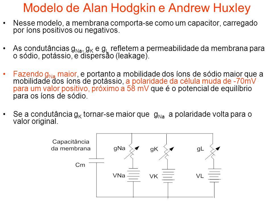 Modelo de Alan Hodgkin e Andrew Huxley Nesse modelo, a membrana comporta-se como um capacitor, carregado por íons positivos ou negativos. As condutânc