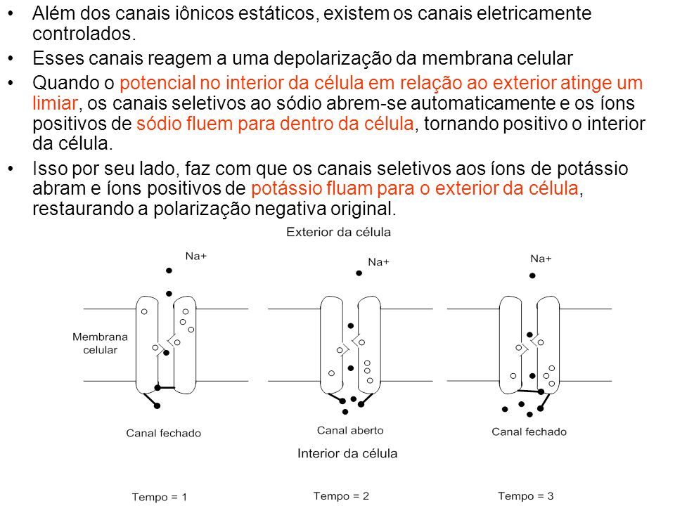 Além dos canais iônicos estáticos, existem os canais eletricamente controlados. Esses canais reagem a uma depolarização da membrana celular Quando o p