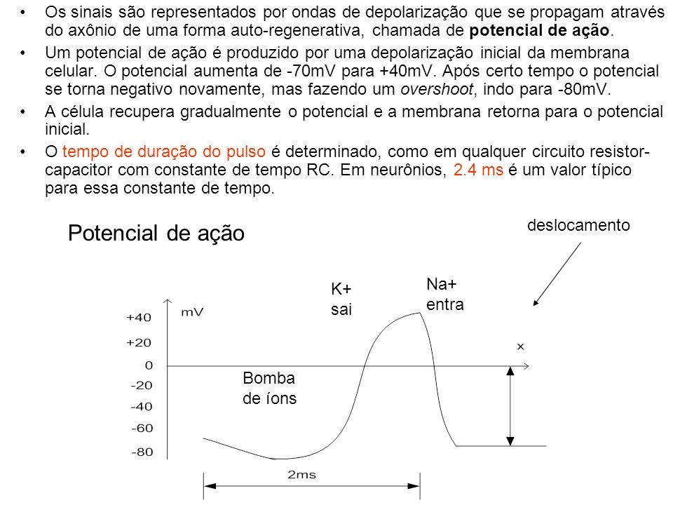 Os sinais são representados por ondas de depolarização que se propagam através do axônio de uma forma auto-regenerativa, chamada de potencial de ação.