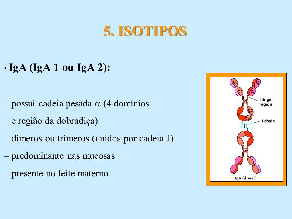 IgA (IgA 1 ou IgA 2): – possui cadeia pesada (4 domínios e região da dobradiça) – dímeros ou trímeros (unidos por cadeia J) – predominante nas mucosas