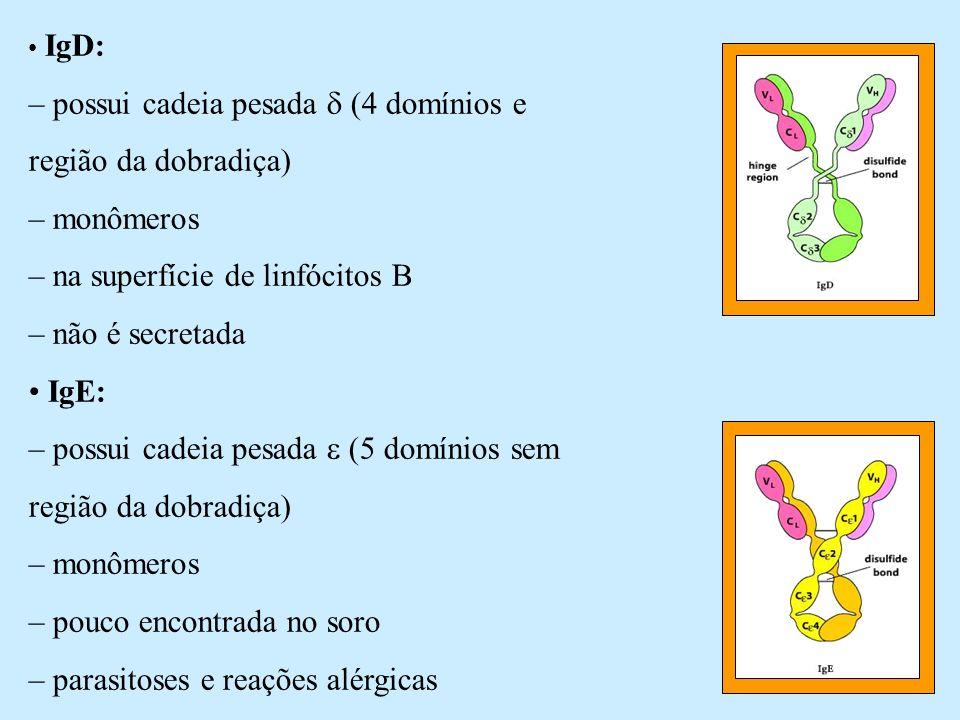 IgD: – possui cadeia pesada (4 domínios e região da dobradiça) – monômeros – na superfície de linfócitos B – não é secretada IgE: – possui cadeia pesa