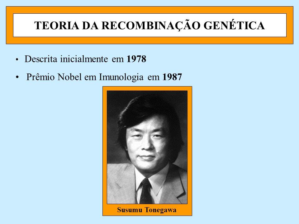 TEORIA DA RECOMBINAÇÃO GENÉTICA Descrita inicialmente em 1978 Prêmio Nobel em Imunologia em 1987 Susumu Tonegawa
