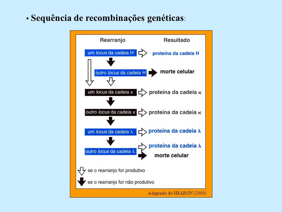 Sequência de recombinações genéticas :