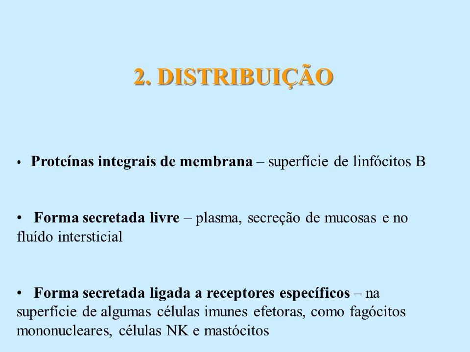 11.REFERÊNCIAS BIBLIOGRÁFICAS ABBAS, A. K. & LICHTMAN, A.