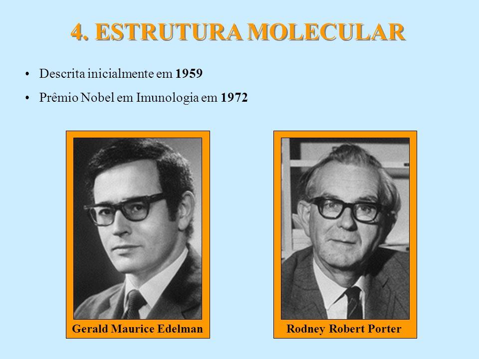 Rodney Robert PorterGerald Maurice Edelman 4. ESTRUTURA MOLECULAR Descrita inicialmente em 1959 Prêmio Nobel em Imunologia em 1972