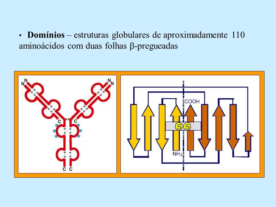 Adaptado de SHARON (2000) Regiões da molécula: – variável – constante – dobradiça