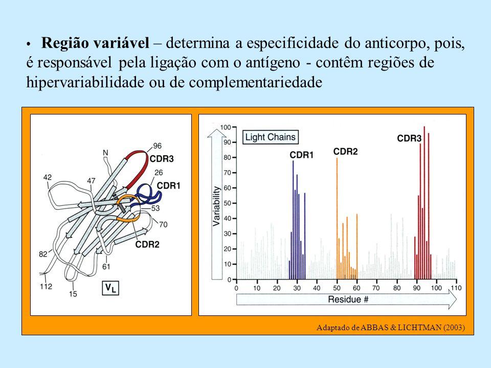 Adaptado de ABBAS & LICHTMAN (2003) Região variável – determina a especificidade do anticorpo, pois, é responsável pela ligação com o antígeno - contê