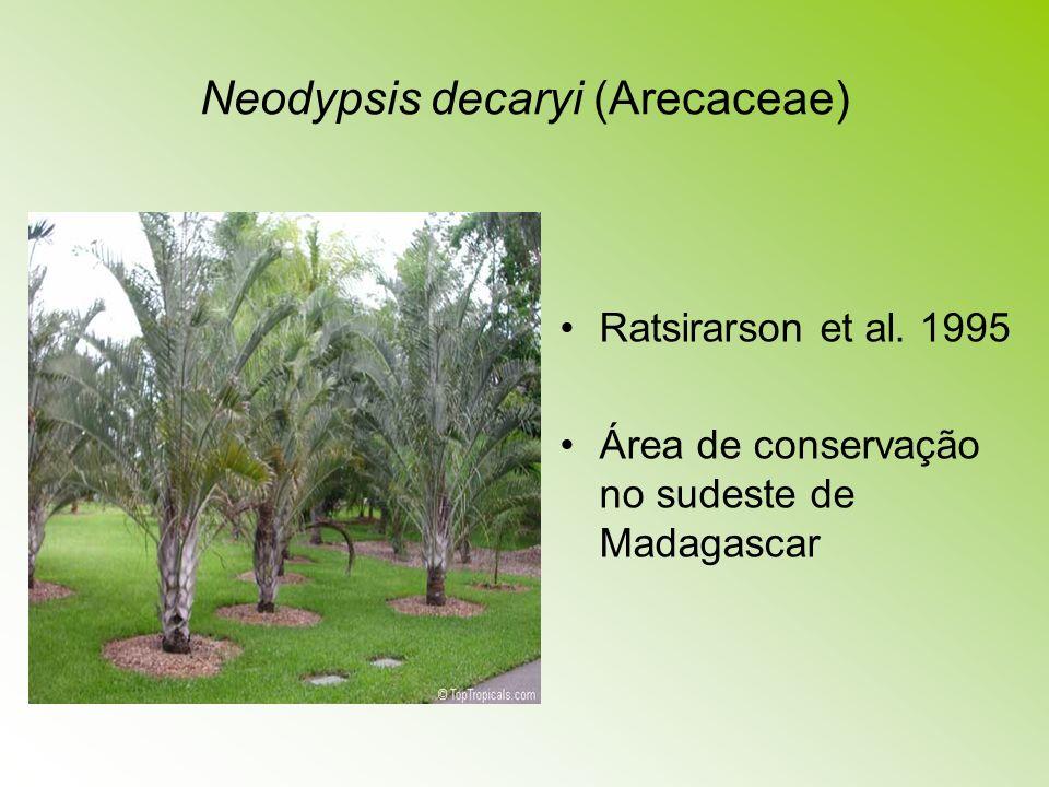 Neodypsis decaryi (Arecaceae) Ratsirarson et al. 1995 Área de conservação no sudeste de Madagascar