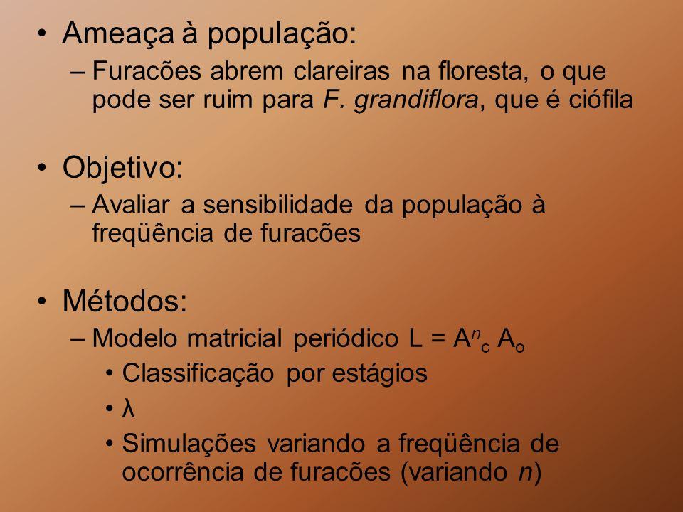 Ameaça à população: –Furacões abrem clareiras na floresta, o que pode ser ruim para F. grandiflora, que é ciófila Objetivo: –Avaliar a sensibilidade d