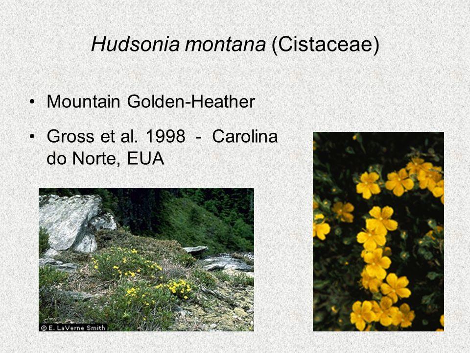 Hudsonia montana (Cistaceae) Mountain Golden-Heather Gross et al. 1998 - Carolina do Norte, EUA