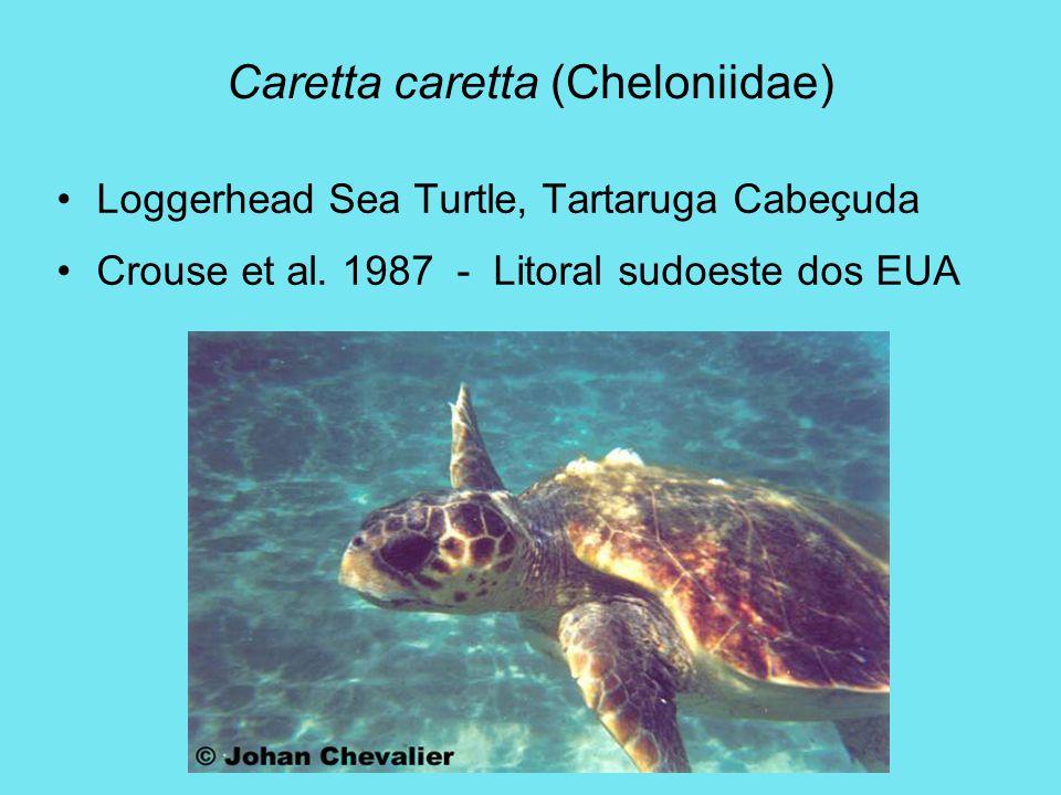 Caretta caretta (Cheloniidae) Loggerhead Sea Turtle, Tartaruga Cabeçuda Crouse et al. 1987 - Litoral sudoeste dos EUA