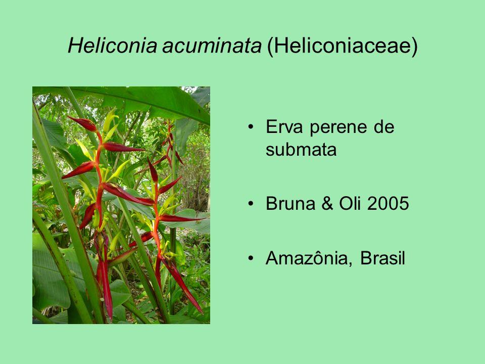 Heliconia acuminata (Heliconiaceae) Erva perene de submata Bruna & Oli 2005 Amazônia, Brasil