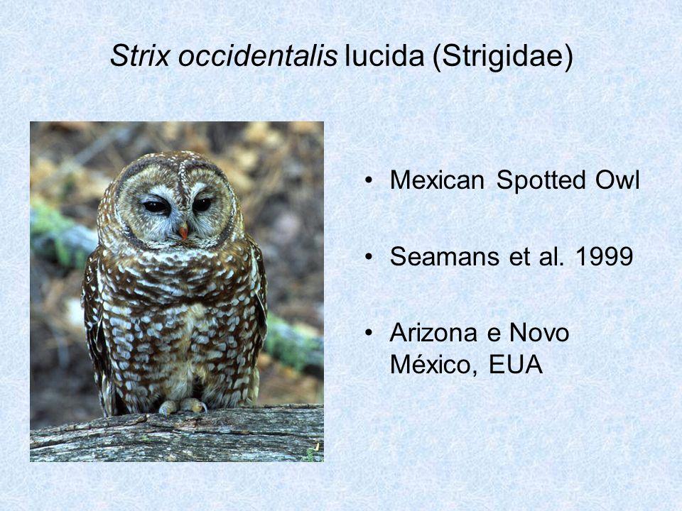 Strix occidentalis lucida (Strigidae) Mexican Spotted Owl Seamans et al. 1999 Arizona e Novo México, EUA