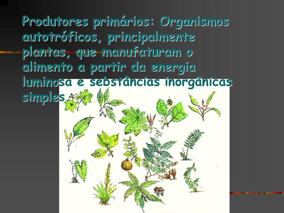 Produtores primários: Organismos autotróficos, principalmente plantas, que manufaturam o alimento a partir da energia luminosa e sebstâncias inorgânic