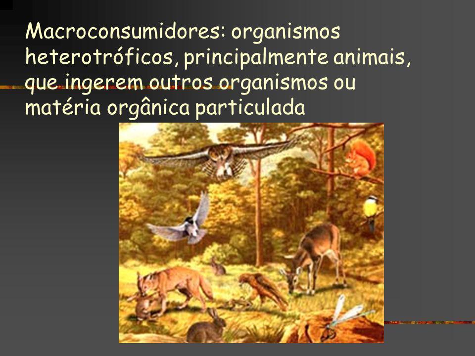 Macroconsumidores: organismos heterotróficos, principalmente animais, que ingerem outros organismos ou matéria orgânica particulada