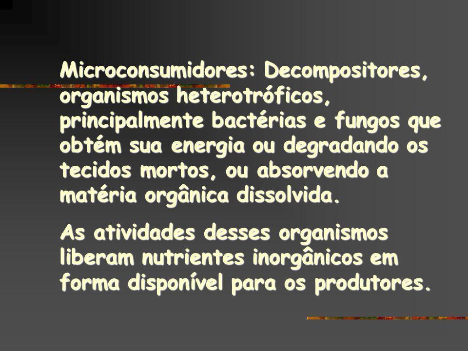 Microconsumidores: Decompositores, organismos heterotróficos, principalmente bactérias e fungos que obtém sua energia ou degradando os tecidos mortos,