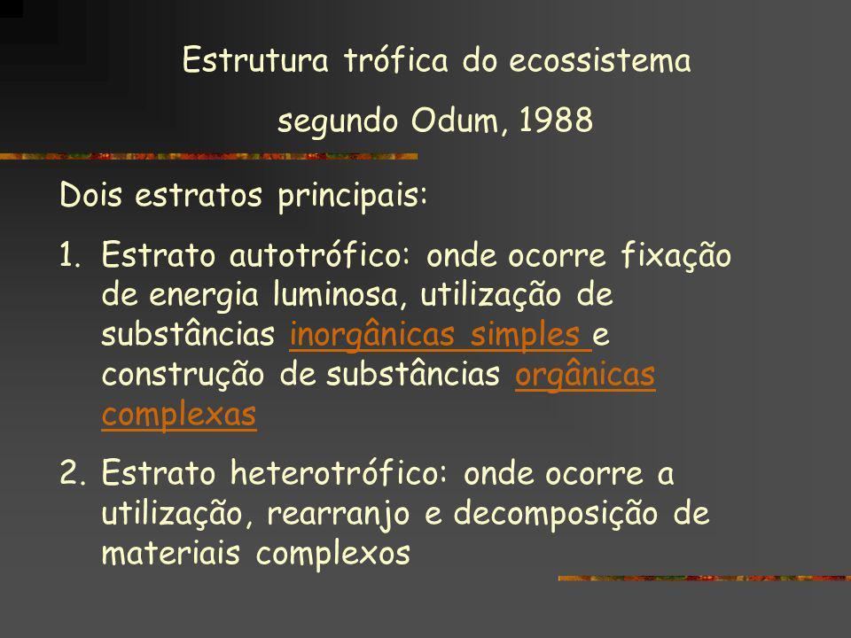 Estrutura trófica do ecossistema segundo Odum, 1988 Dois estratos principais: 1.Estrato autotrófico: onde ocorre fixação de energia luminosa, utilizaç