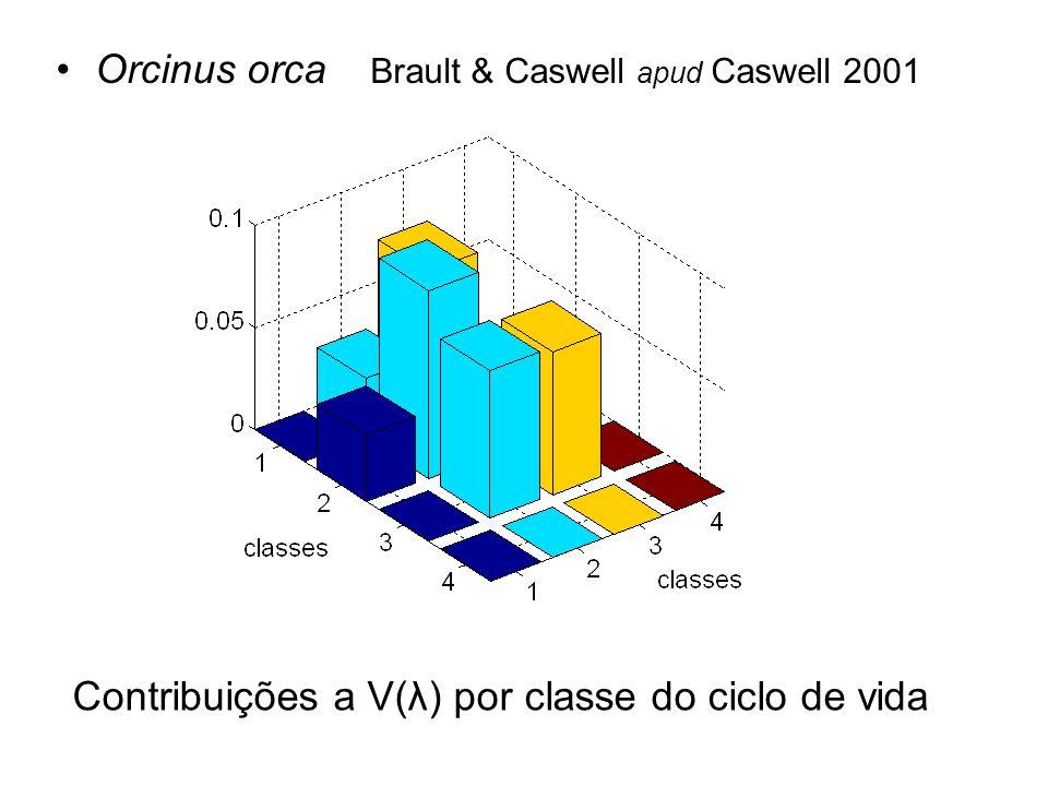 Orcinus orca Brault & Caswell apud Caswell 2001 Contribuições a V(λ) por classe do ciclo de vida