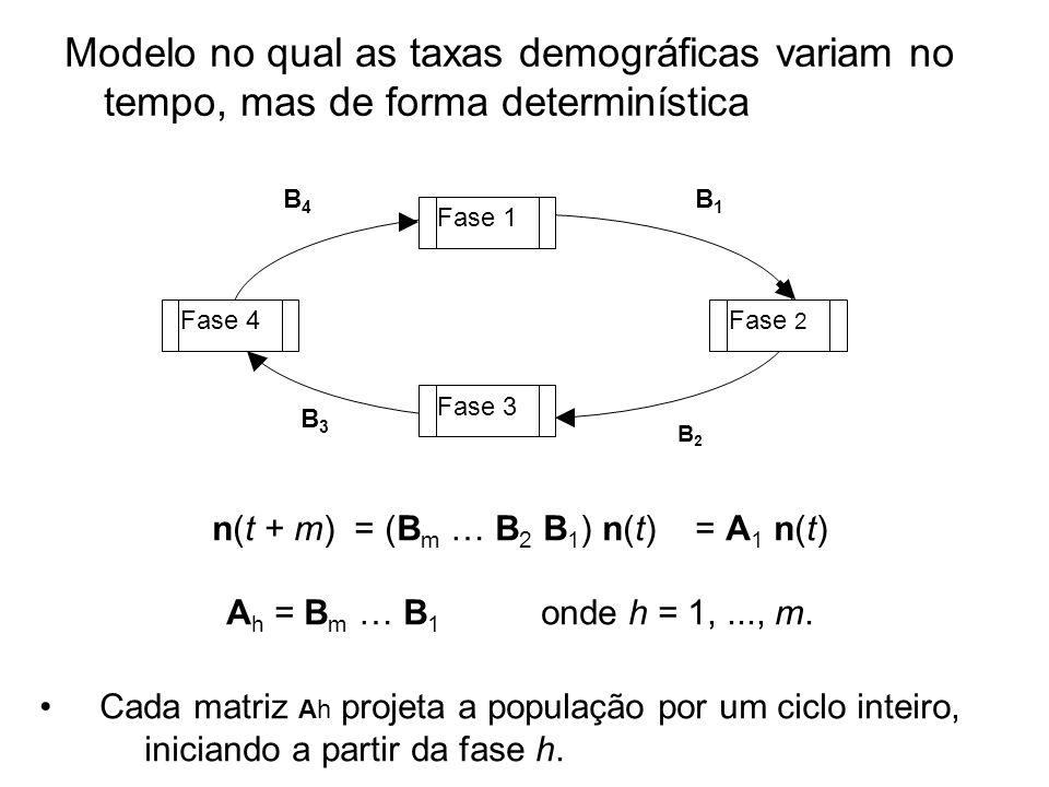 Modelo no qual as taxas demográficas variam no tempo, mas de forma determinística Fase 1 Fase 2 Fase 3 Fase 4 B4B4 B3B3 B2B2 B1B1 n(t + m) = (B m … B