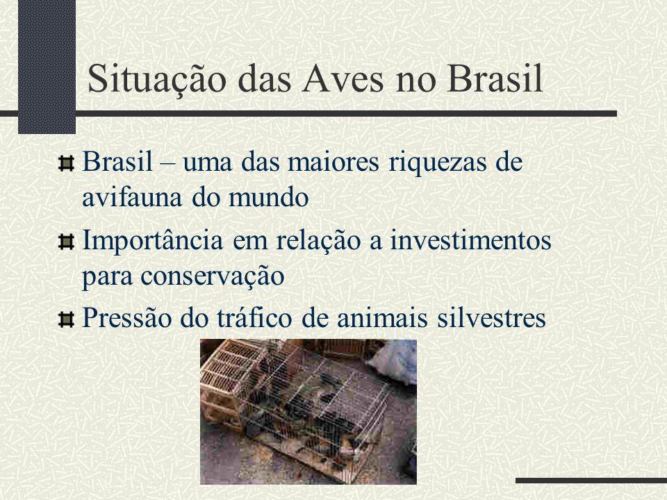 Situação das Aves no Brasil Brasil – uma das maiores riquezas de avifauna do mundo Importância em relação a investimentos para conservação Pressão do
