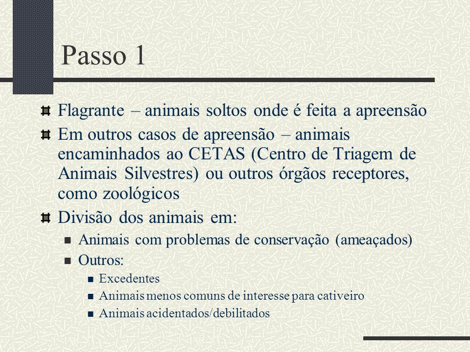 Passo 1 Flagrante – animais soltos onde é feita a apreensão Em outros casos de apreensão – animais encaminhados ao CETAS (Centro de Triagem de Animais