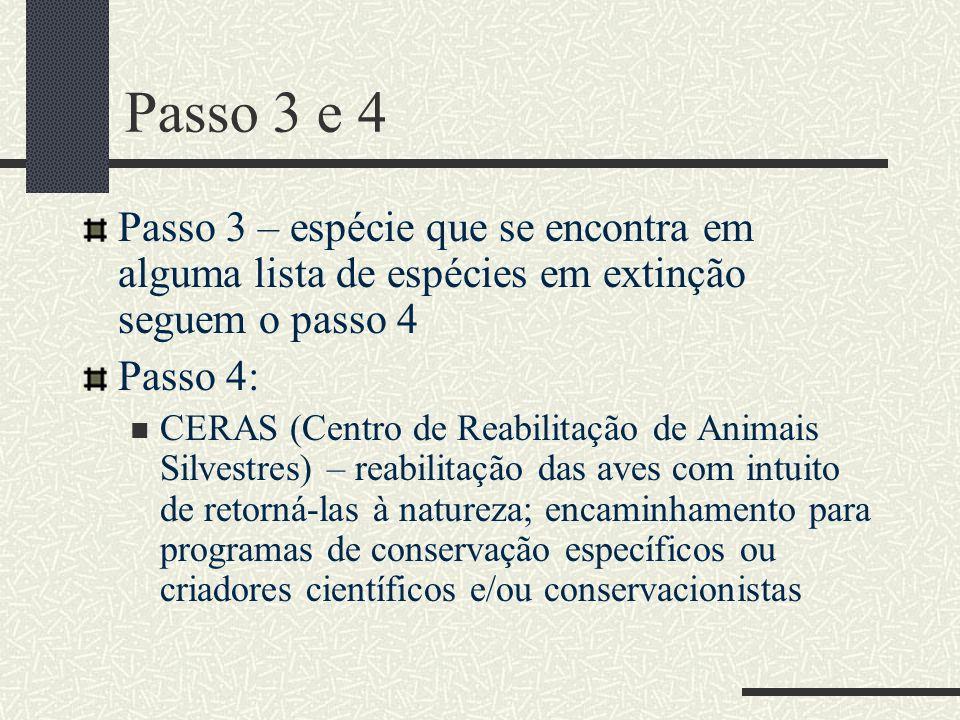 Passo 3 e 4 Passo 3 – espécie que se encontra em alguma lista de espécies em extinção seguem o passo 4 Passo 4: CERAS (Centro de Reabilitação de Anima