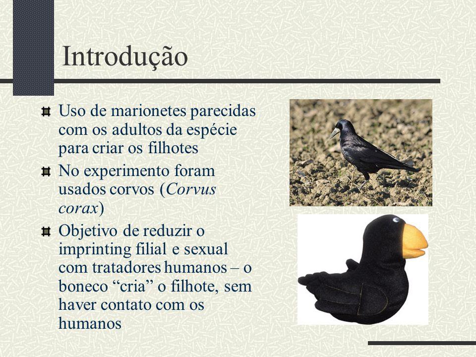 Introdução Uso de marionetes parecidas com os adultos da espécie para criar os filhotes No experimento foram usados corvos (Corvus corax) Objetivo de