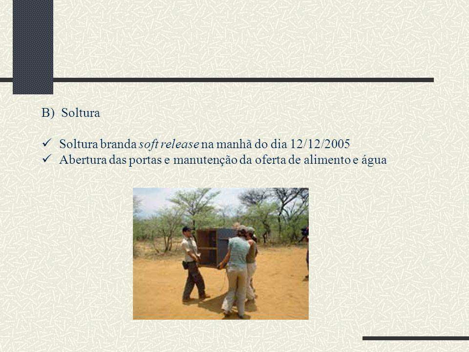 B) Soltura Soltura branda soft release na manhã do dia 12/12/2005 Abertura das portas e manutenção da oferta de alimento e água