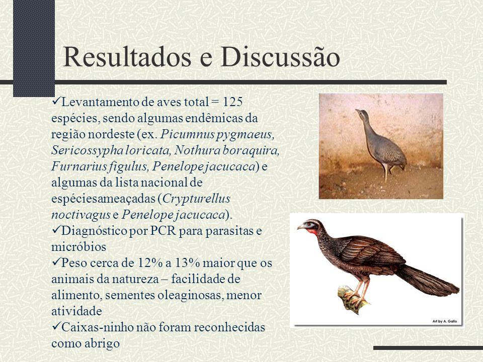 Levantamento de aves total = 125 espécies, sendo algumas endêmicas da região nordeste (ex. Picumnus pygmaeus, Sericossypha loricata, Nothura boraquira