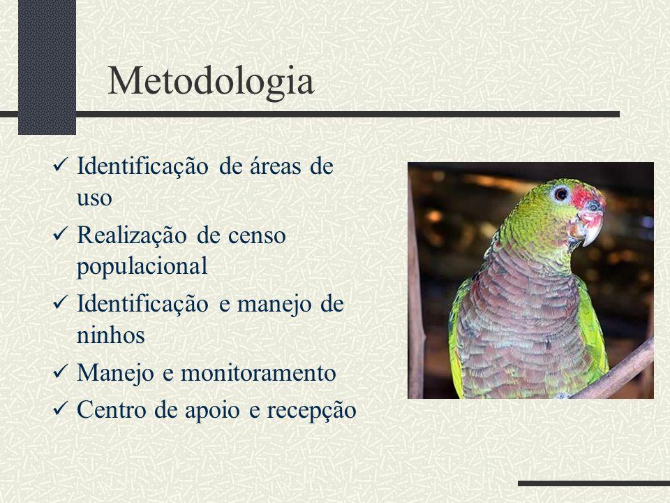 Metodologia Identificação de áreas de uso Realização de censo populacional Identificação e manejo de ninhos Manejo e monitoramento Centro de apoio e r