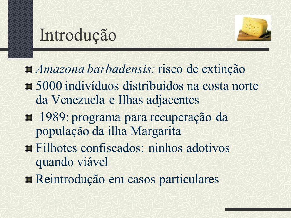 Introdução Amazona barbadensis: risco de extinção 5000 indivíduos distribuídos na costa norte da Venezuela e Ilhas adjacentes 1989: programa para recu