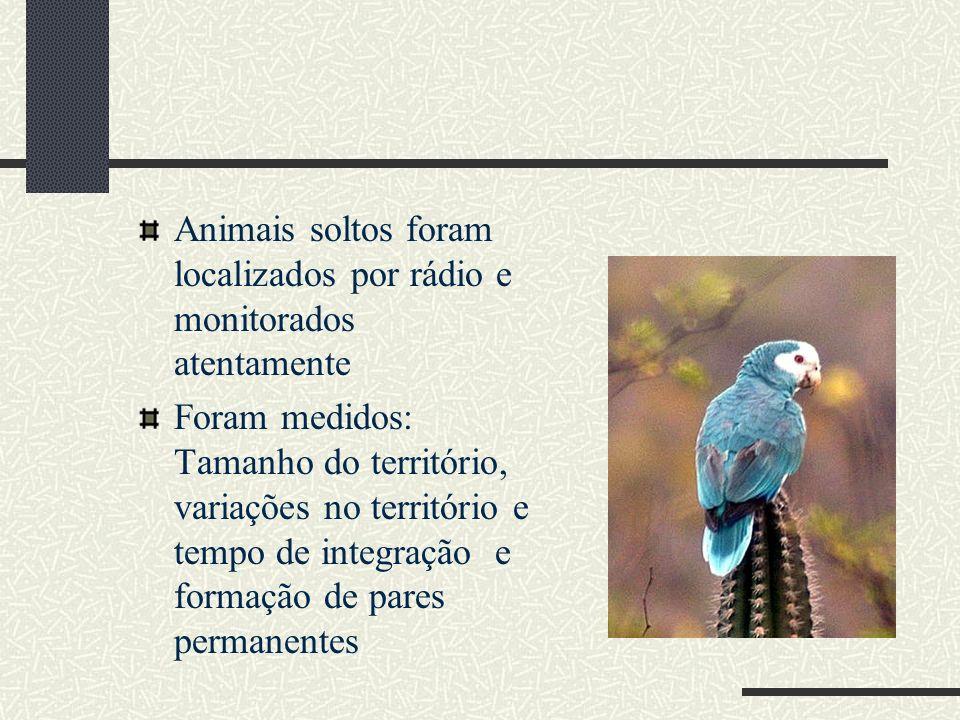 Animais soltos foram localizados por rádio e monitorados atentamente Foram medidos: Tamanho do território, variações no território e tempo de integraç