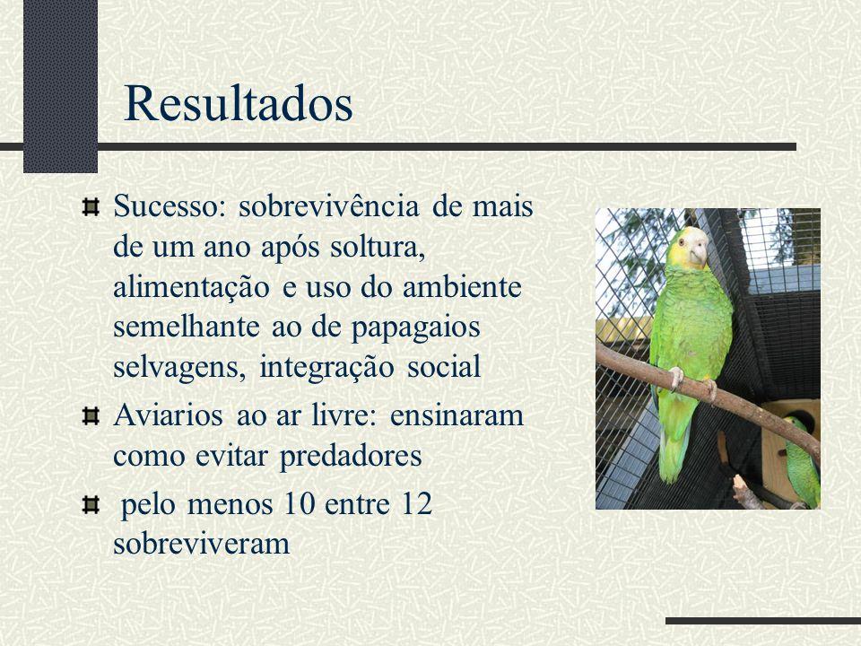 Sucesso: sobrevivência de mais de um ano após soltura, alimentação e uso do ambiente semelhante ao de papagaios selvagens, integração social Aviarios