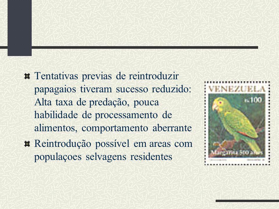 Tentativas previas de reintroduzir papagaios tiveram sucesso reduzido: Alta taxa de predação, pouca habilidade de processamento de alimentos, comporta