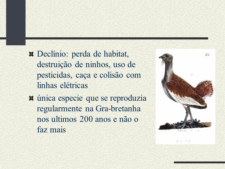 Declínio: perda de habitat, destruição de ninhos, uso de pesticidas, caça e colisão com linhas elétricas única especie que se reproduzia regularmente