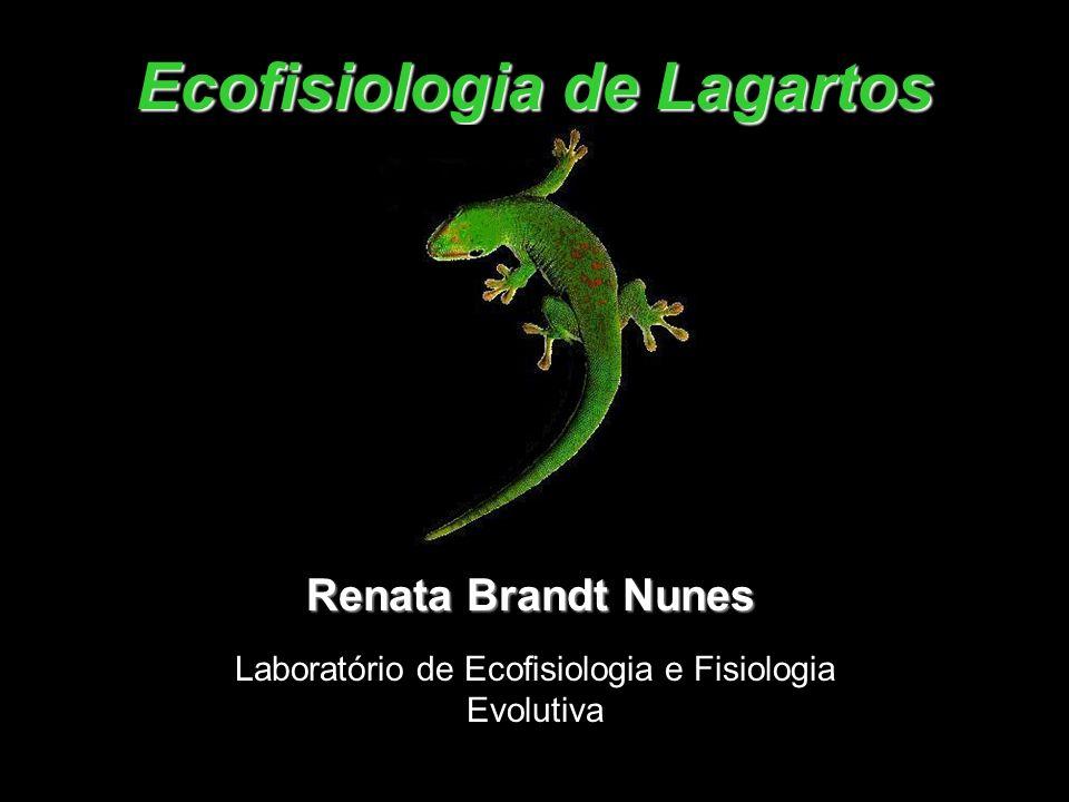 Ecofisiologia de Lagartos Renata Brandt Nunes Laboratório de Ecofisiologia e Fisiologia Evolutiva