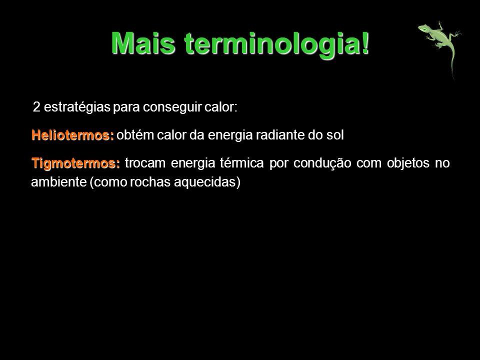 Mais terminologia! 2 estratégias para conseguir calor: Heliotermos: Heliotermos: obtém calor da energia radiante do sol Tigmotermos: Tigmotermos: troc