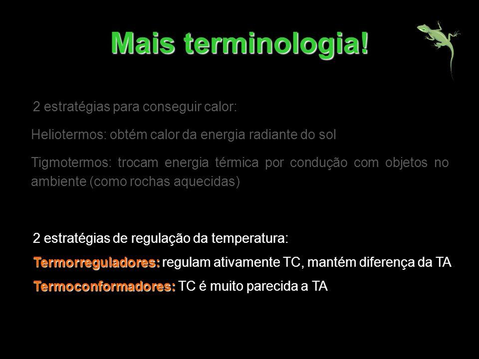 Mais terminologia! 2 estratégias para conseguir calor: Heliotermos: obtém calor da energia radiante do sol Tigmotermos: trocam energia térmica por con