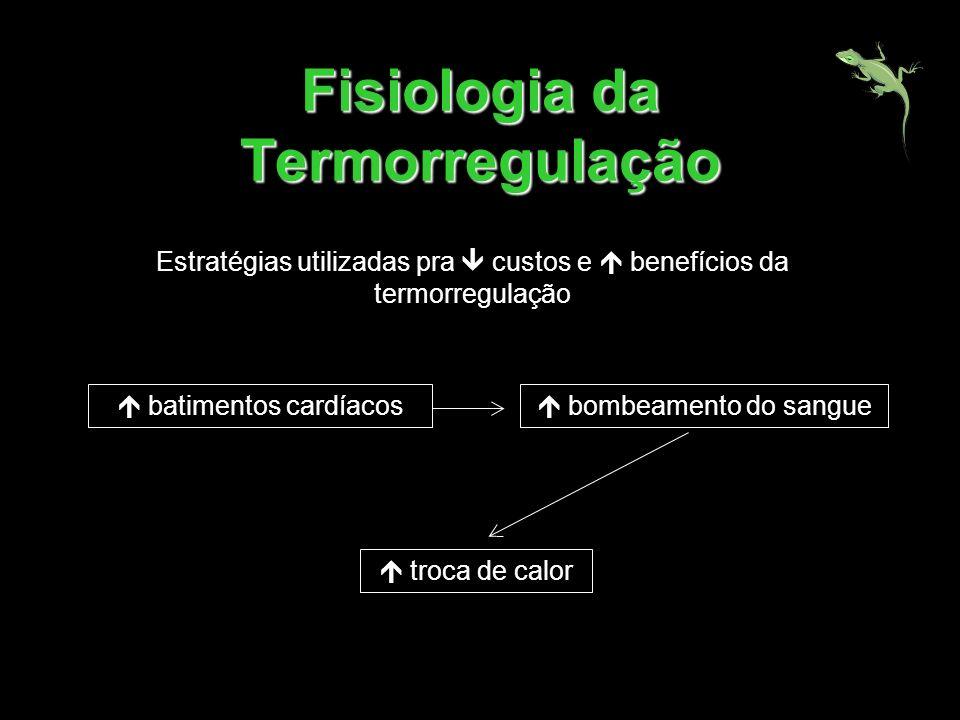 Fisiologia da Termorregulação Estratégias utilizadas pra custos e benefícios da termorregulação batimentos cardíacos bombeamento do sangue troca de ca