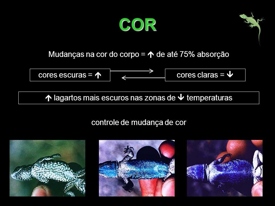 COR Mudanças na cor do corpo = de até 75% absorção cores escuras = lagartos mais escuros nas zonas de temperaturas controle de mudança de cor cores cl