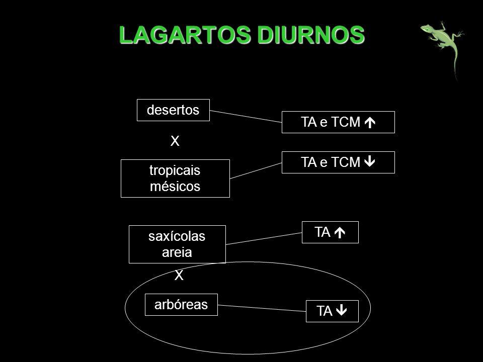 desertos TA e TCM tropicais mésicos TA X TA e TCM arbóreas saxícolas areia X TA LAGARTOS DIURNOS